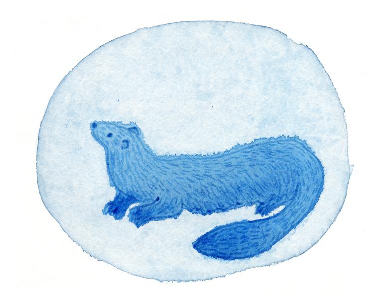 Aquarelle-gravure-belette1-W