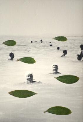 photographie argentique, feuilles